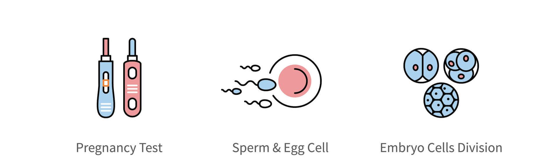 Dicas para aumentar a ovulação e a fertilidade